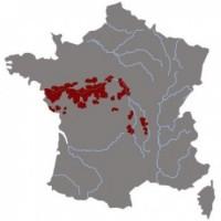 Saumur